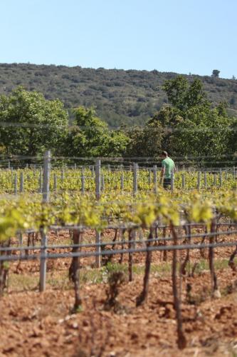 Vineyard near Puyloubier, France