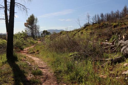 Walking path near Puyloubier, France