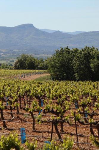 Vineyards near Puyloubier, France